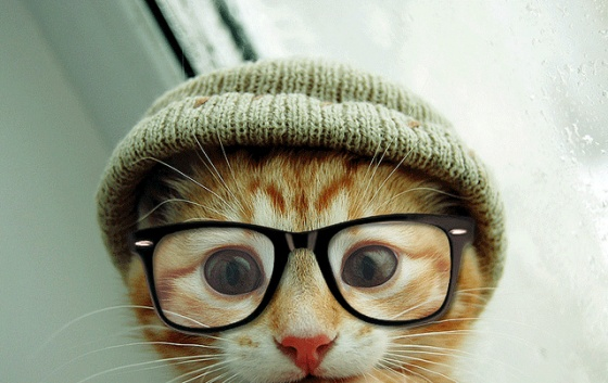hipster-kitty1