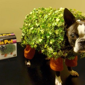 Why House Plants are Better than Dogs