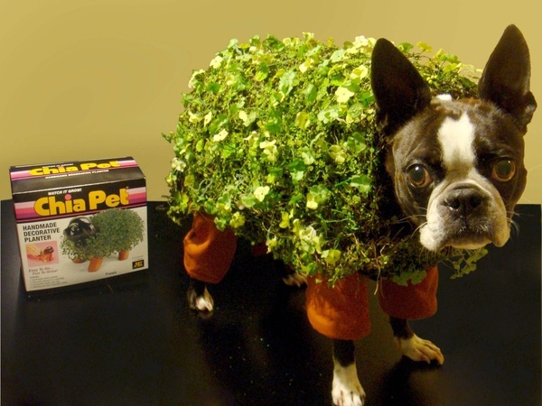 chia_pet_dog_plant